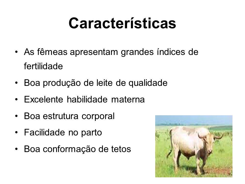 Características As fêmeas apresentam grandes índices de fertilidade Boa produção de leite de qualidade Excelente habilidade materna Boa estrutura corp