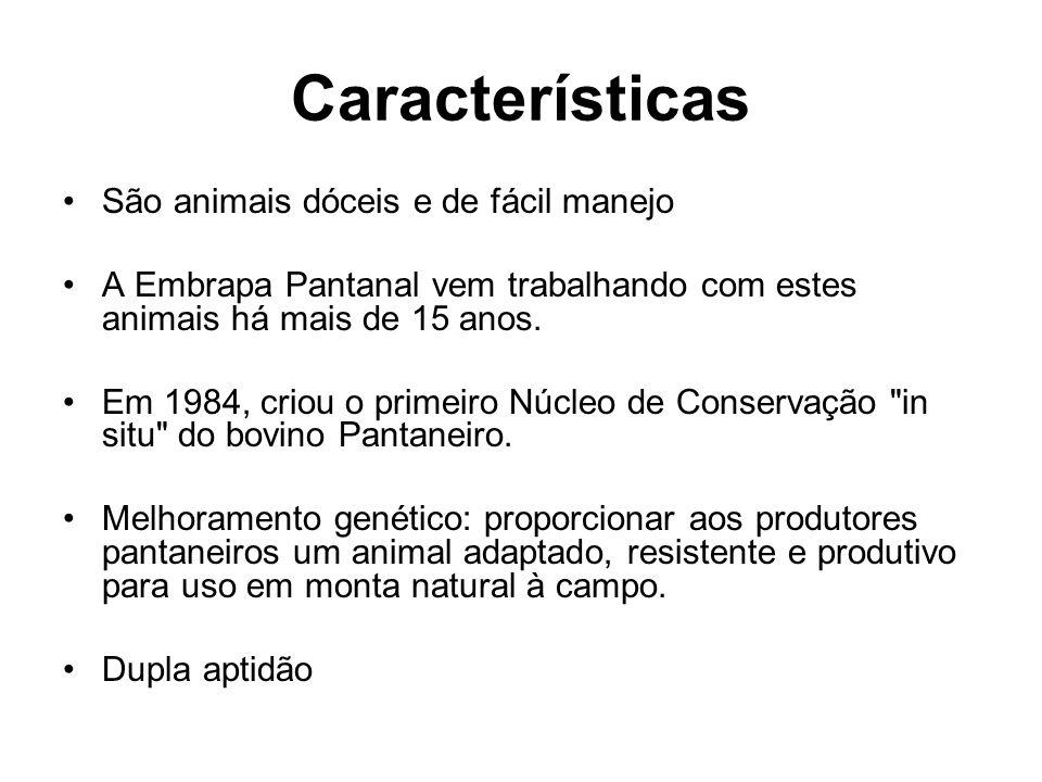 Características São animais dóceis e de fácil manejo A Embrapa Pantanal vem trabalhando com estes animais há mais de 15 anos. Em 1984, criou o primeir