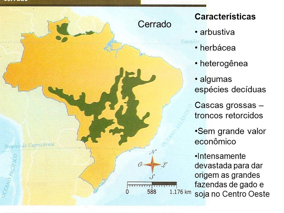 Cerrado Características arbustiva herbácea heterogênea algumas espécies decíduas Cascas grossas – troncos retorcidos Sem grande valor econômico Intensamente devastada para dar origem as grandes fazendas de gado e soja no Centro Oeste