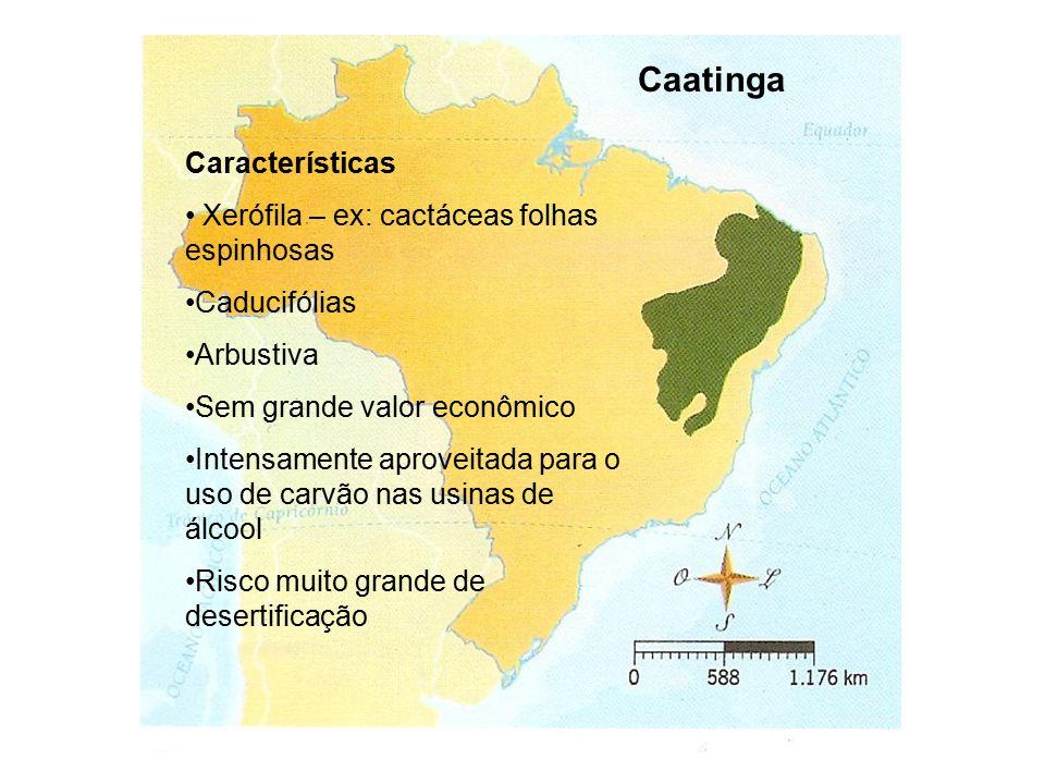 Caatinga Características Xerófila – ex: cactáceas folhas espinhosas Caducifólias Arbustiva Sem grande valor econômico Intensamente aproveitada para o uso de carvão nas usinas de álcool Risco muito grande de desertificação