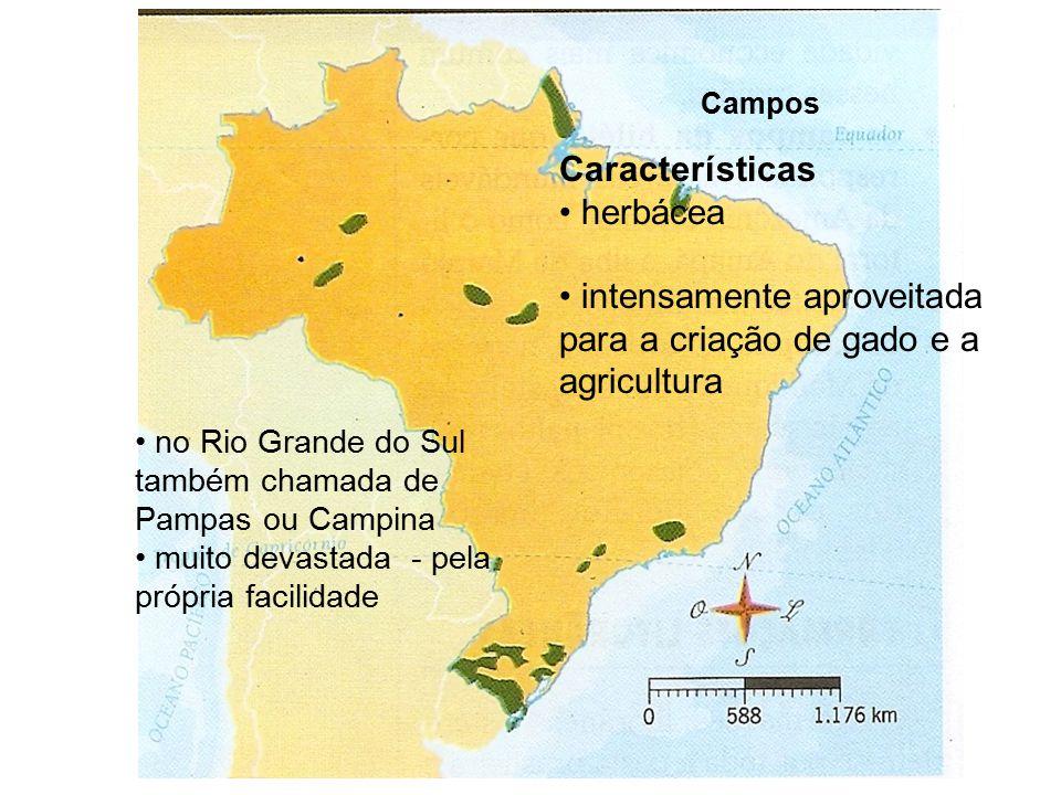 Campos Características herbácea intensamente aproveitada para a criação de gado e a agricultura no Rio Grande do Sul também chamada de Pampas ou Campina muito devastada - pela própria facilidade