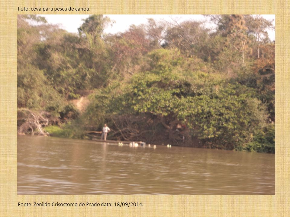 Foto: ceva para pesca de canoa. Fonte: Zenildo Crisostomo do Prado data: 18/09/2014.