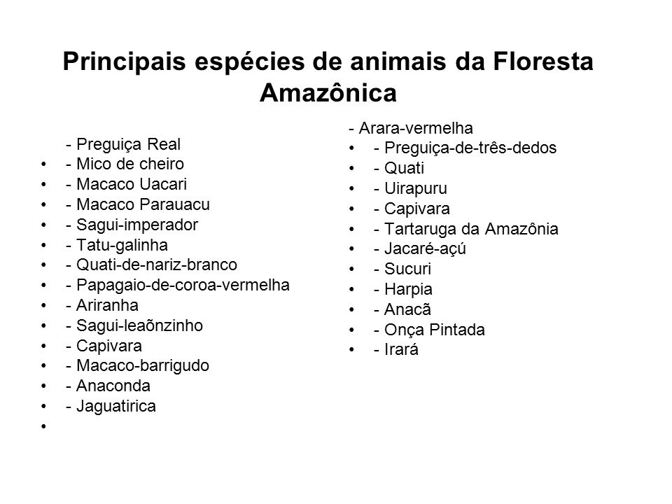 Principais espécies de animais da Floresta Amazônica - Preguiça Real - Mico de cheiro - Macaco Uacari - Macaco Parauacu - Sagui-imperador - Tatu-galin