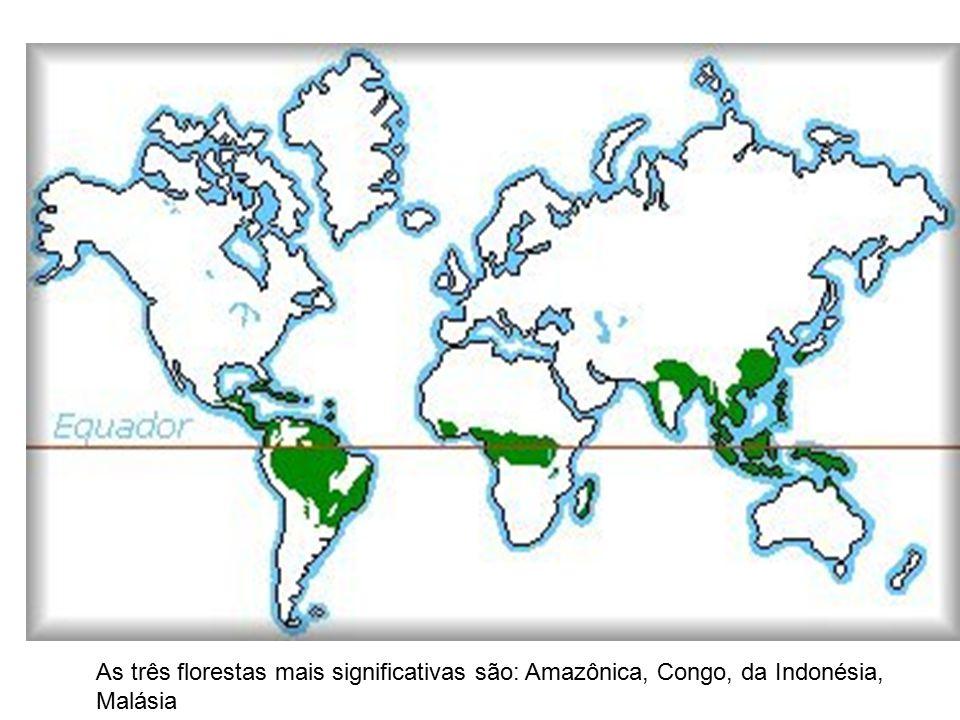 As três florestas mais significativas são: Amazônica, Congo, da Indonésia, Malásia
