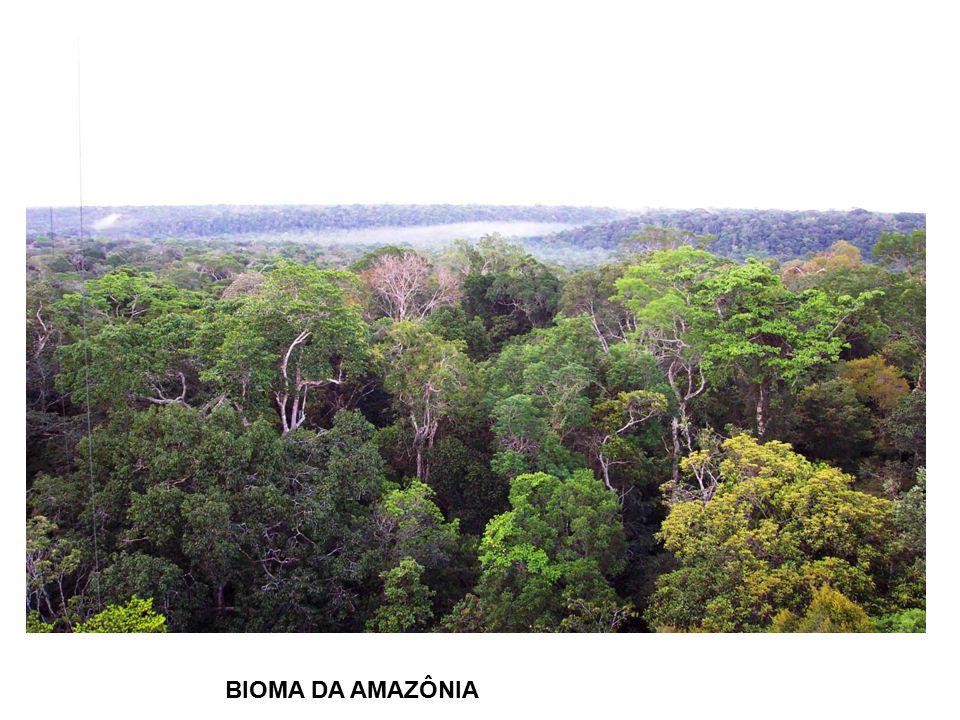 BIOMA DA AMAZÔNIA