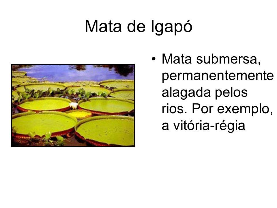 Mata de Igapó Mata submersa, permanentemente alagada pelos rios. Por exemplo, a vitória-régia