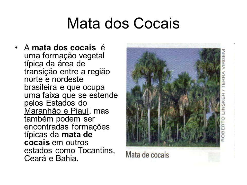 A mata dos cocais é uma formação vegetal típica da área de transição entre a região norte e nordeste brasileira e que ocupa uma faixa que se estende p
