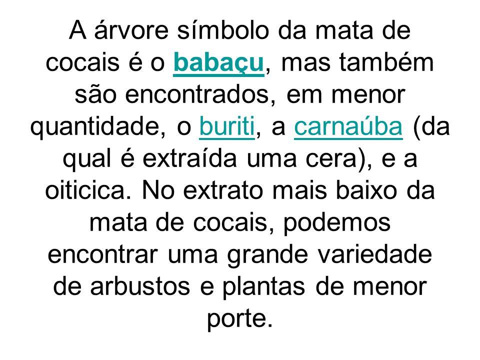 A árvore símbolo da mata de cocais é o babaçu, mas também são encontrados, em menor quantidade, o buriti, a carnaúba (da qual é extraída uma cera), e