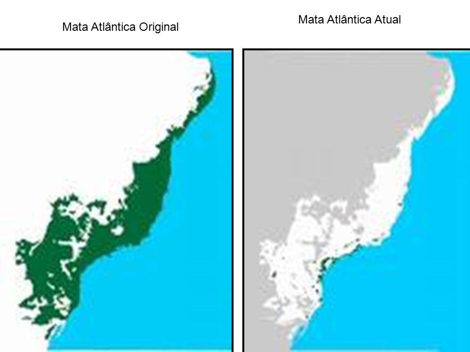 Mata Atlântica Original Mata Atlântica Atual