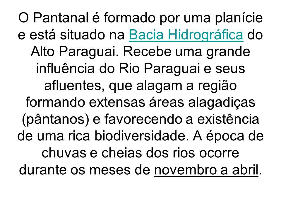 O Pantanal é formado por uma planície e está situado na Bacia Hidrográfica do Alto Paraguai. Recebe uma grande influência do Rio Paraguai e seus aflue
