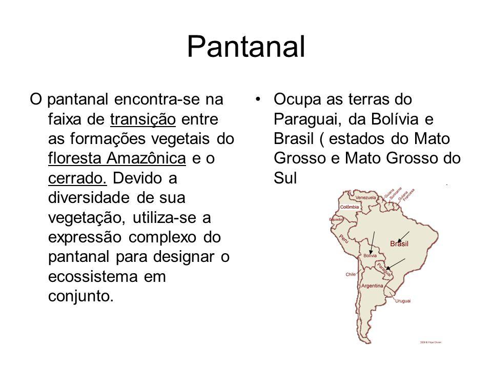 Pantanal O pantanal encontra-se na faixa de transição entre as formações vegetais do floresta Amazônica e o cerrado. Devido a diversidade de sua veget