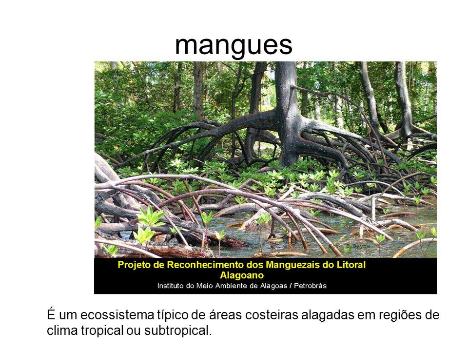 mangues É um ecossistema típico de áreas costeiras alagadas em regiões de clima tropical ou subtropical.