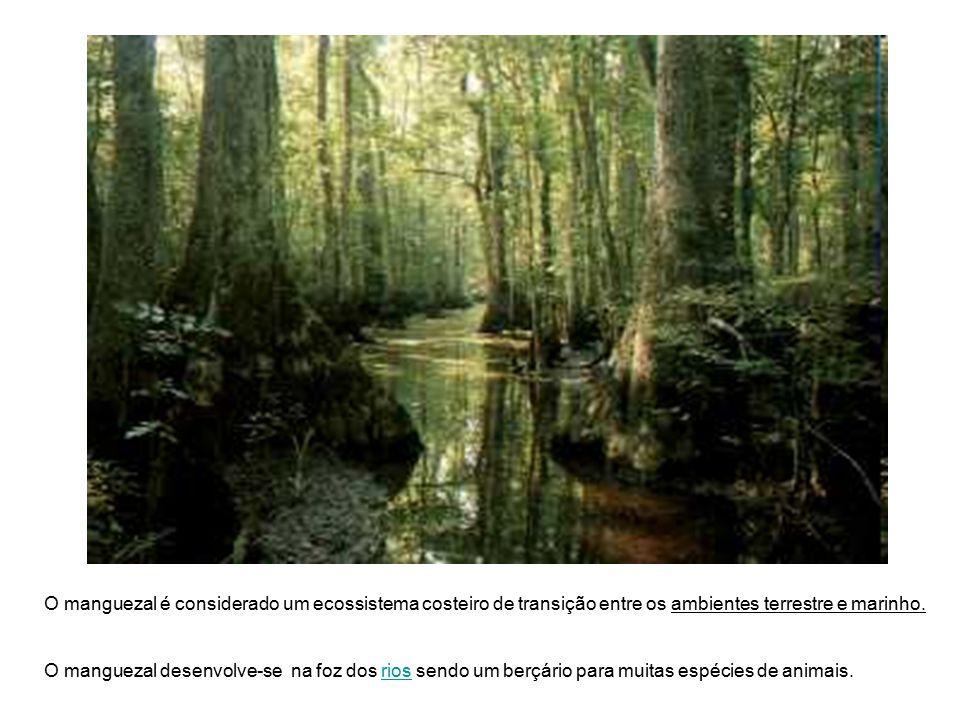 O manguezal é considerado um ecossistema costeiro de transição entre os ambientes terrestre e marinho. O manguezal desenvolve-se na foz dos rios sendo