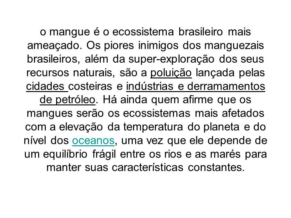 o mangue é o ecossistema brasileiro mais ameaçado. Os piores inimigos dos manguezais brasileiros, além da super-exploração dos seus recursos naturais,