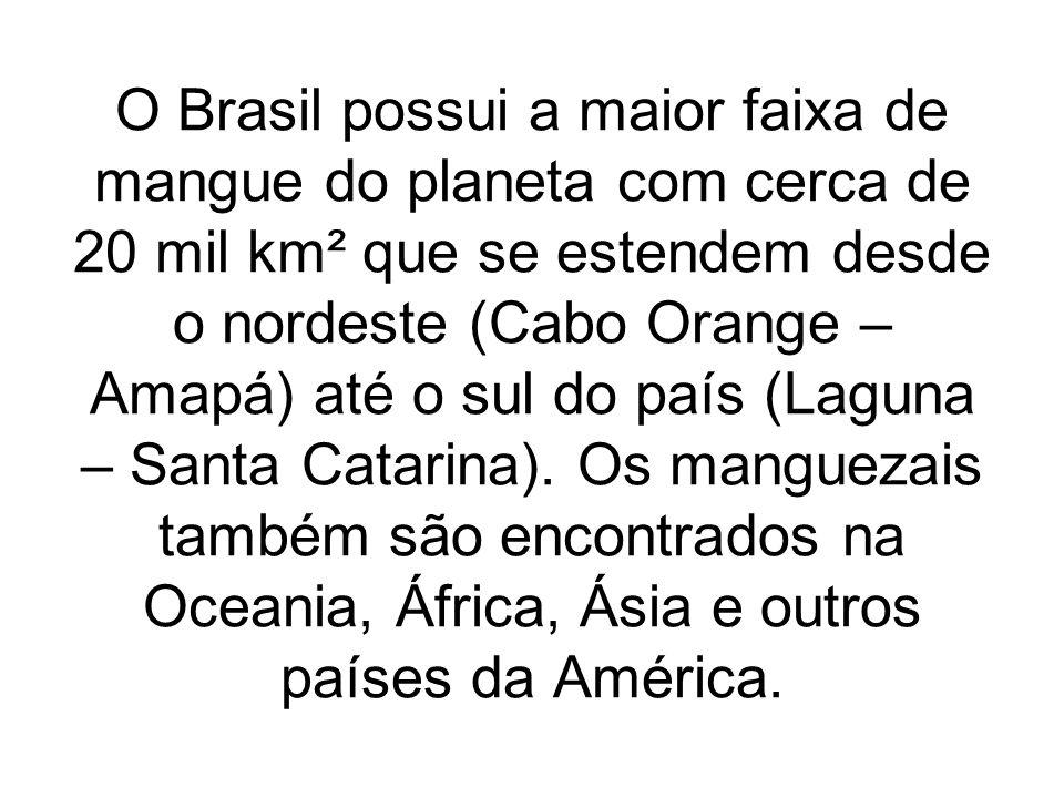 O Brasil possui a maior faixa de mangue do planeta com cerca de 20 mil km² que se estendem desde o nordeste (Cabo Orange – Amapá) até o sul do país (L