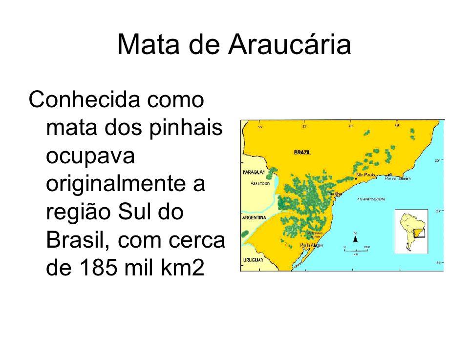 Mata de Araucária Conhecida como mata dos pinhais ocupava originalmente a região Sul do Brasil, com cerca de 185 mil km2