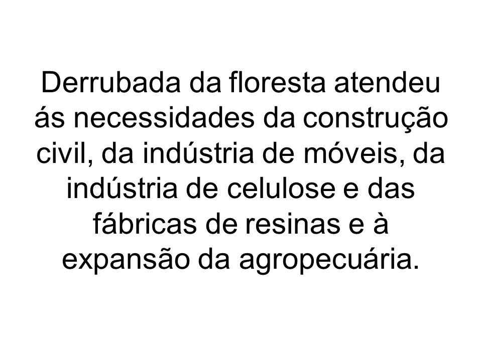 Derrubada da floresta atendeu ás necessidades da construção civil, da indústria de móveis, da indústria de celulose e das fábricas de resinas e à expa