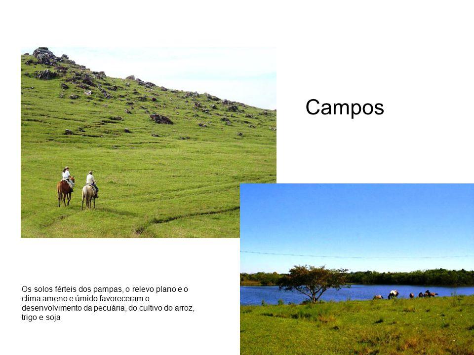 Campos Os solos férteis dos pampas, o relevo plano e o clima ameno e úmido favoreceram o desenvolvimento da pecuária, do cultivo do arroz, trigo e soj