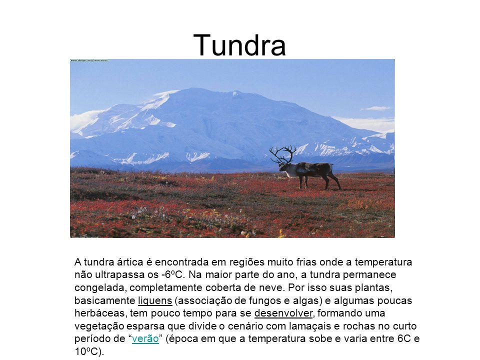 Tundra A tundra ártica é encontrada em regiões muito frias onde a temperatura não ultrapassa os -6ºC. Na maior parte do ano, a tundra permanece congel