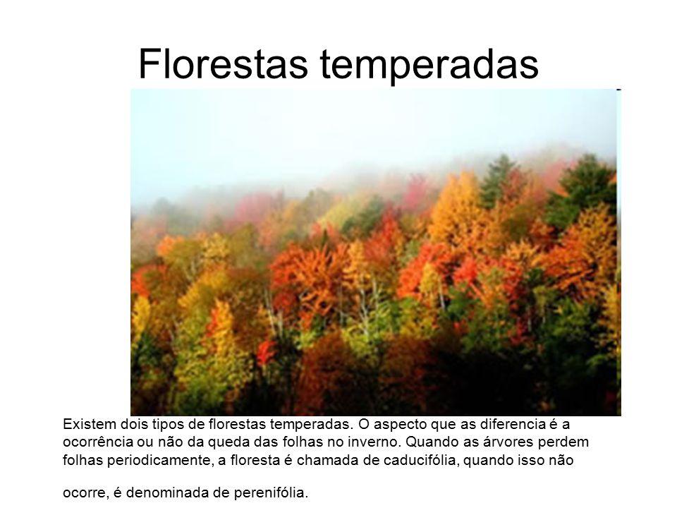 Florestas temperadas Existem dois tipos de florestas temperadas. O aspecto que as diferencia é a ocorrência ou não da queda das folhas no inverno. Qua
