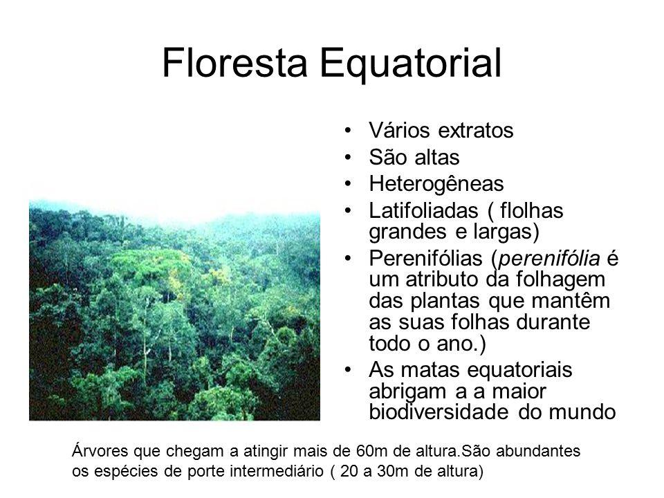 Floresta Equatorial Vários extratos São altas Heterogêneas Latifoliadas ( flolhas grandes e largas) Perenifólias (perenifólia é um atributo da folhage