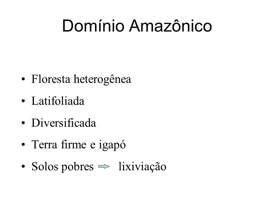 Domínio Amazônico Floresta heterogênea Latifoliada Diversificada Terra firme e igapó Solos pobres lixiviação