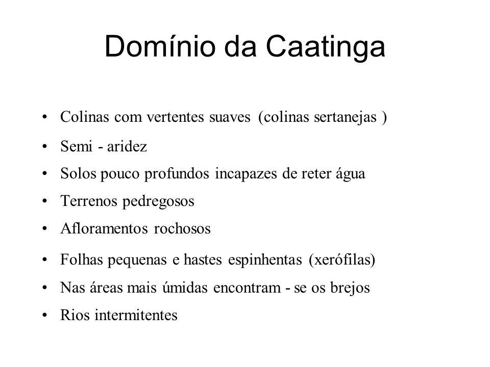 Domínio da Caatinga Colinas com vertentes suaves (colinas sertanejas ) Semi - aridez Solos pouco profundos incapazes de reter água Terrenos pedregosos