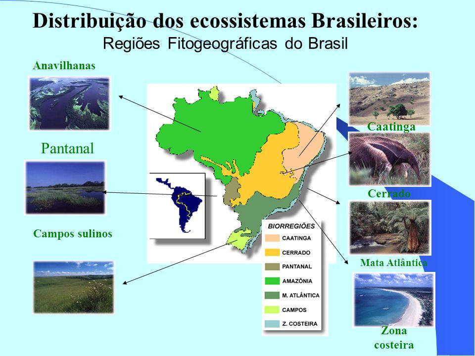 Mata Atlântica Cerrado Anavilhanas Campos sulinos Pantanal Distribuição dos ecossistemas Brasileiros: Regiões Fitogeográficas do Brasil Caatinga Zona costeira