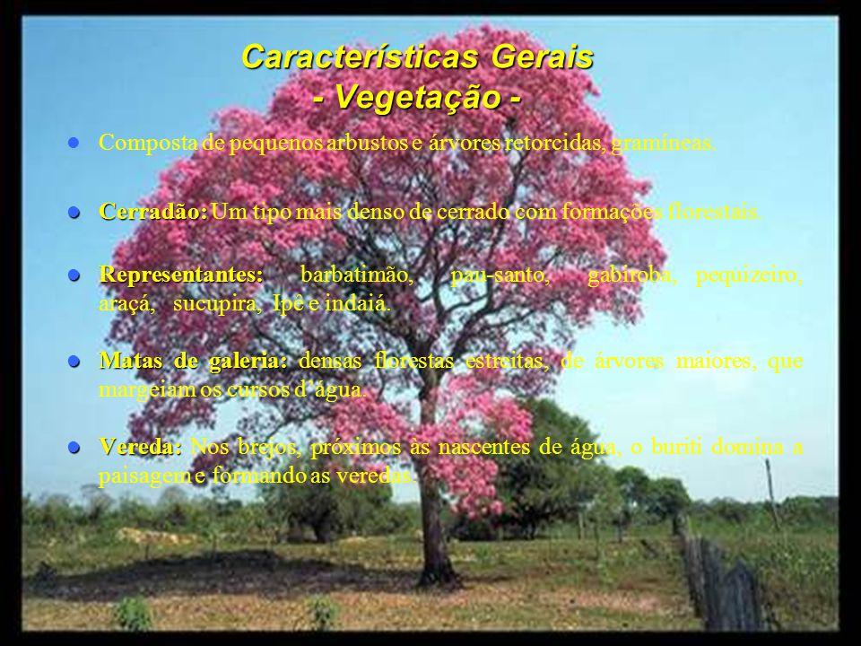Características Gerais - Vegetação - Composta de pequenos arbustos e árvores retorcidas, gramíneas.