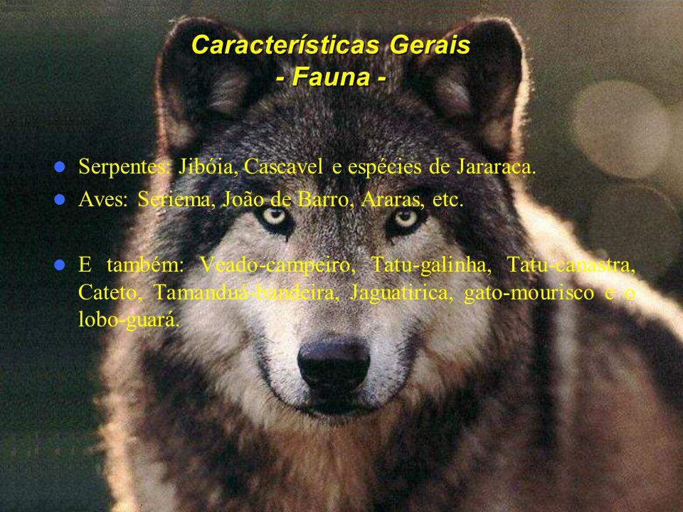 Características Gerais - Fauna - Serpentes: Jibóia, Cascavel e espécies de Jararaca. Aves: Seriema, João de Barro, Araras, etc. E também: Veado-campei