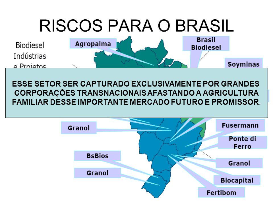 RISCOS PARA O BRASIL ESSE SETOR SER CAPTURADO EXCLUSIVAMENTE POR GRANDES CORPORAÇÕES TRANSNACIONAIS AFASTANDO A AGRICULTURA FAMILIAR DESSE IMPORTANTE