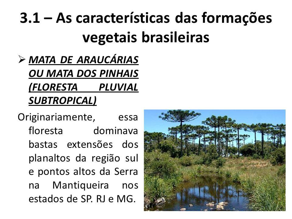  MATA DE ARAUCÁRIAS OU MATA DOS PINHAIS (FLORESTA PLUVIAL SUBTROPICAL) Originariamente, essa floresta dominava bastas extensões dos planaltos da regi