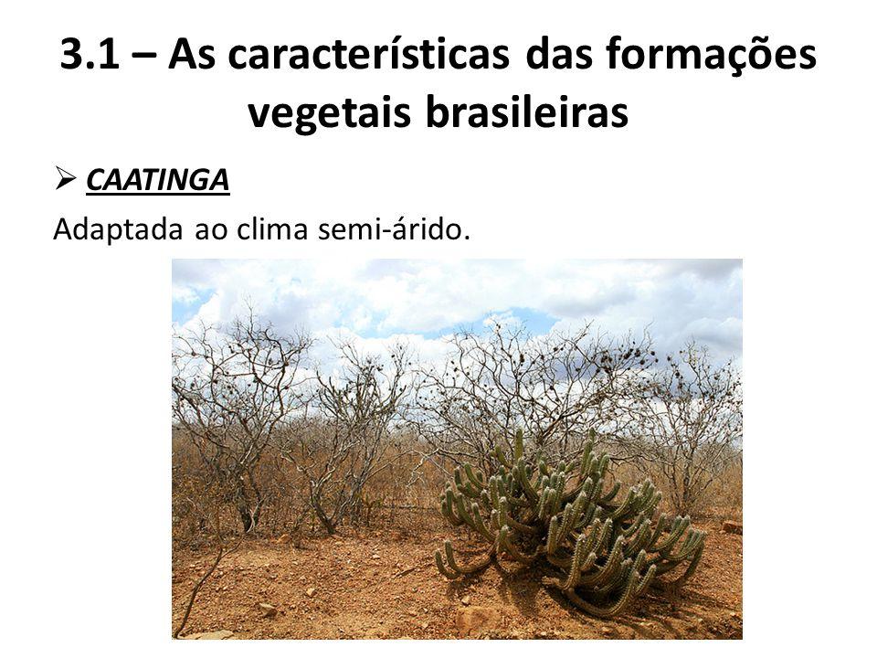  CAATINGA Adaptada ao clima semi-árido. 3.1 – As características das formações vegetais brasileiras