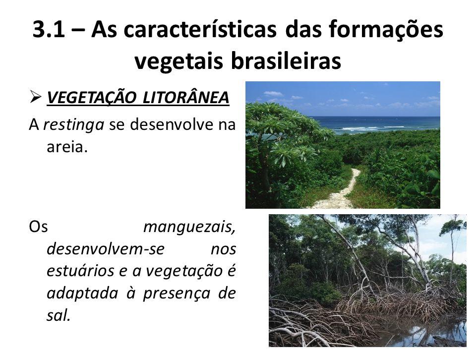 VEGETAÇÃO LITORÂNEA A restinga se desenvolve na areia. Os manguezais, desenvolvem-se nos estuários e a vegetação é adaptada à presença de sal. 3.1 –