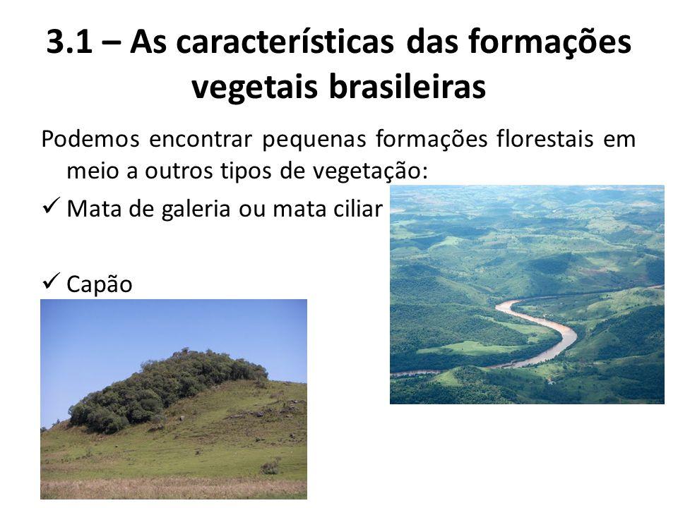 Podemos encontrar pequenas formações florestais em meio a outros tipos de vegetação: Mata de galeria ou mata ciliar Capão 3.1 – As características das