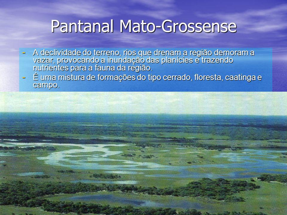 Pantanal Mato-Grossense - A declividade do terreno, rios que drenam a região demoram a vazar, provocando a inundação das planícies e trazendo nutrientes para a fauna da região.