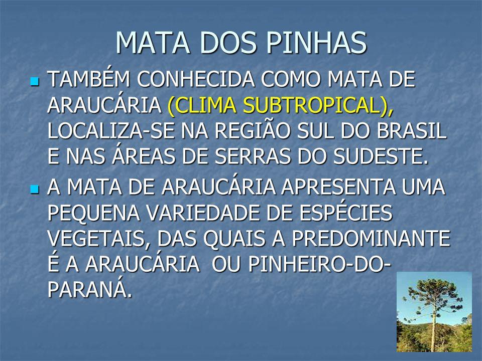 5 MATA DOS PINHAS TAMBÉM CONHECIDA COMO MATA DE ARAUCÁRIA (CLIMA SUBTROPICAL), LOCALIZA-SE NA REGIÃO SUL DO BRASIL E NAS ÁREAS DE SERRAS DO SUDESTE. T