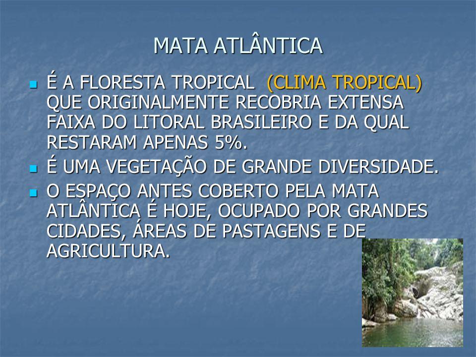 6 MATA ATLÂNTICA É A FLORESTA TROPICAL (CLIMA TROPICAL) QUE ORIGINALMENTE RECOBRIA EXTENSA FAIXA DO LITORAL BRASILEIRO E DA QUAL RESTARAM APENAS 5%. É
