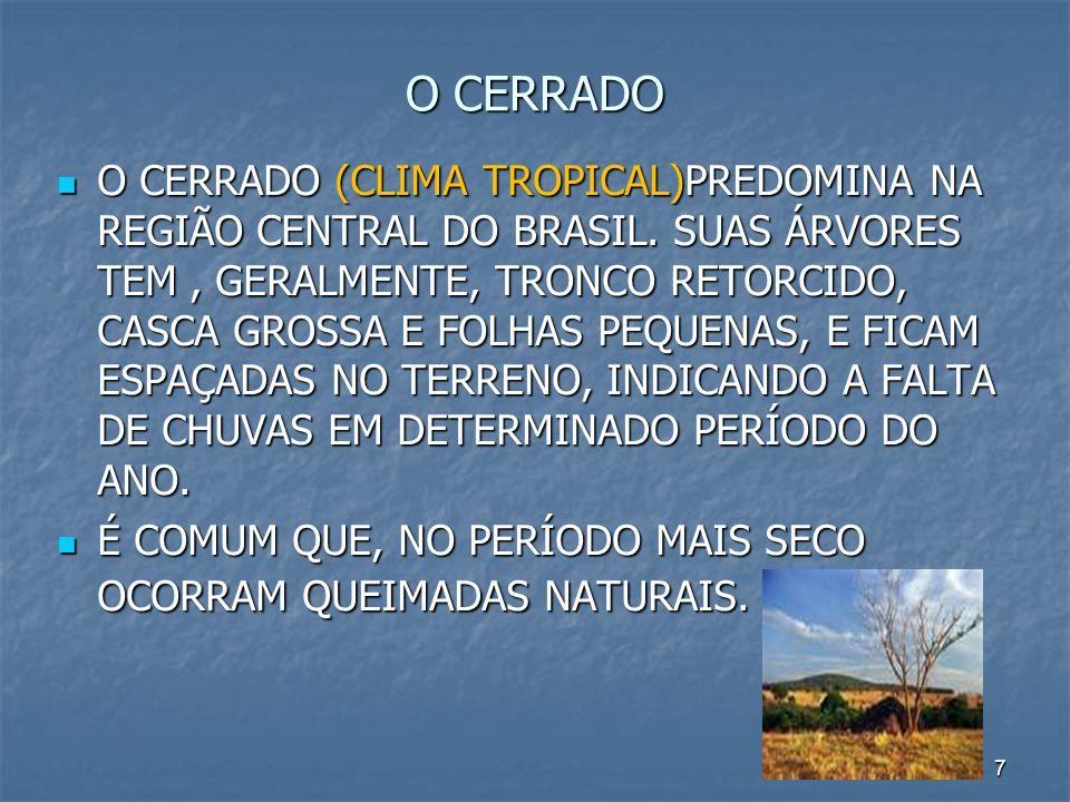 7 O CERRADO O CERRADO (CLIMA TROPICAL)PREDOMINA NA REGIÃO CENTRAL DO BRASIL. SUAS ÁRVORES TEM, GERALMENTE, TRONCO RETORCIDO, CASCA GROSSA E FOLHAS PEQ