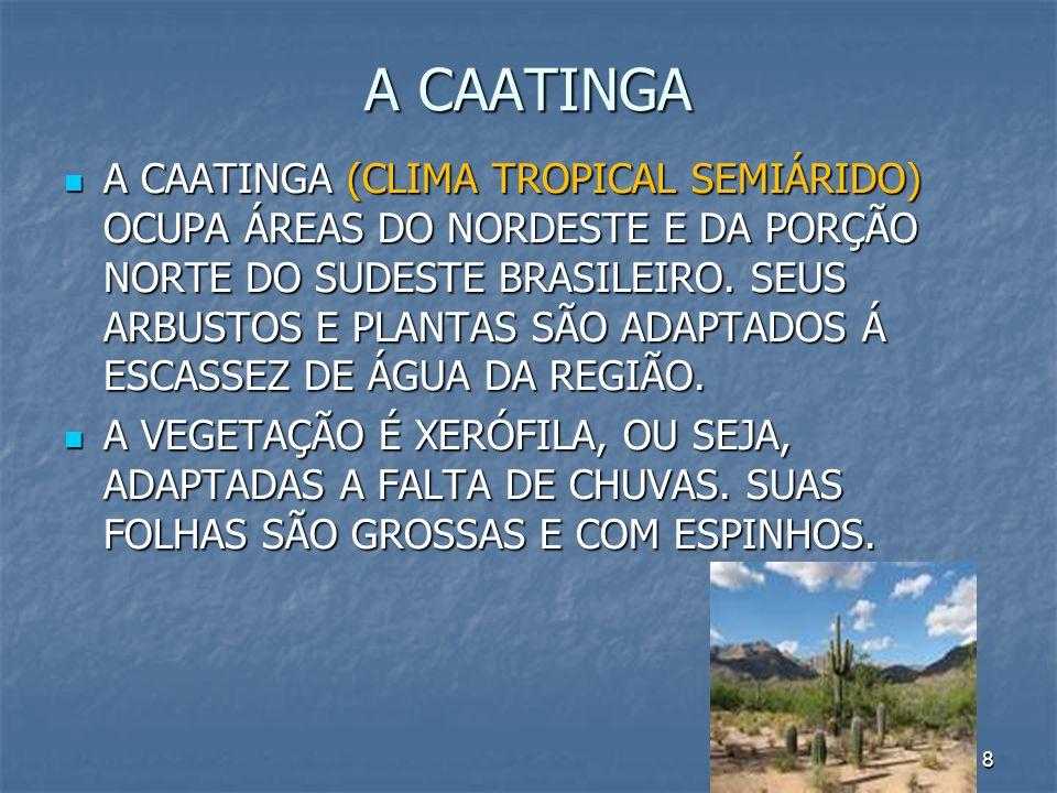 9 OS CAMPOS ELES OCORREM NOS ESTADOS DO RIO GRANDE DO SUL, SANTA CATARINA, PARANÁ, MATO GROSSO DO SUL, MINAS GERAIS, PARÁ E AMAPÁ.