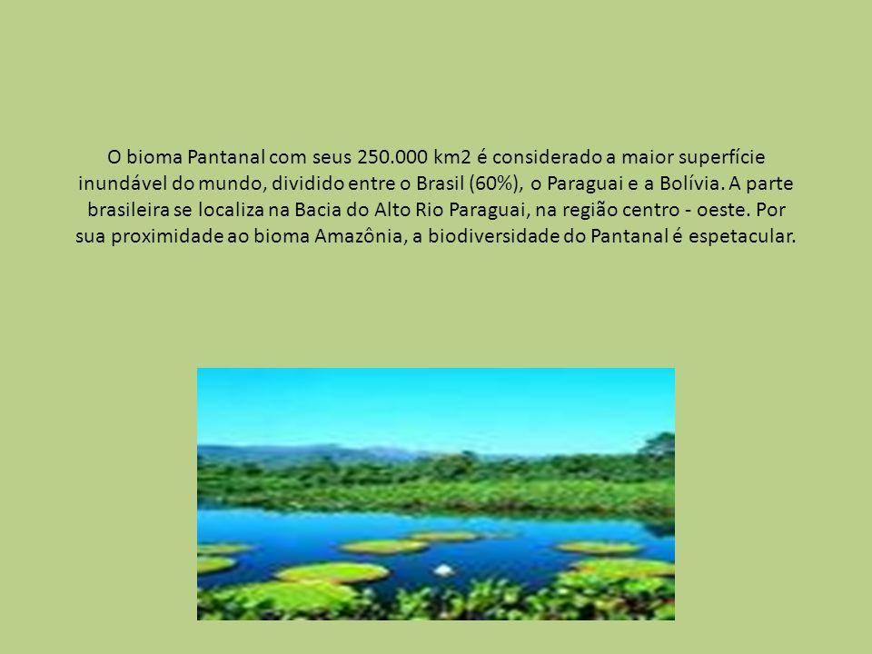 O bioma Pantanal com seus 250.000 km2 é considerado a maior superfície inundável do mundo, dividido entre o Brasil (60%), o Paraguai e a Bolívia. A pa