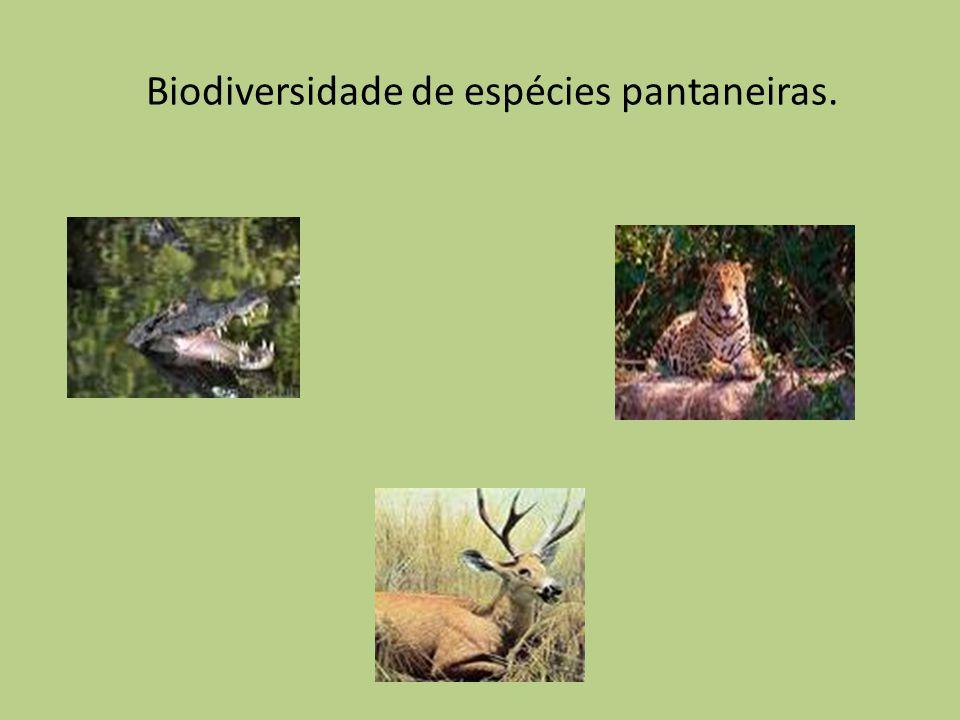 O tuiuiú é uma ave pernalta, tem pescoço nu, preto, e, na parte inferior, o papo também nu e vermelho.