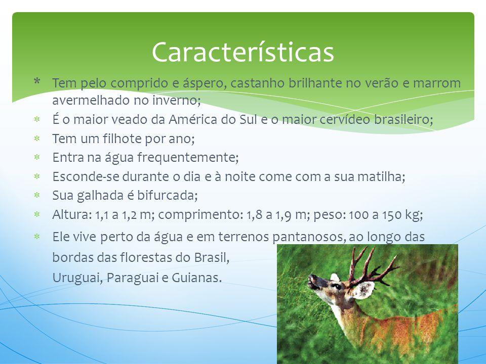* Tem pelo comprido e áspero, castanho brilhante no verão e marrom avermelhado no inverno;  É o maior veado da América do Sul e o maior cervídeo bras