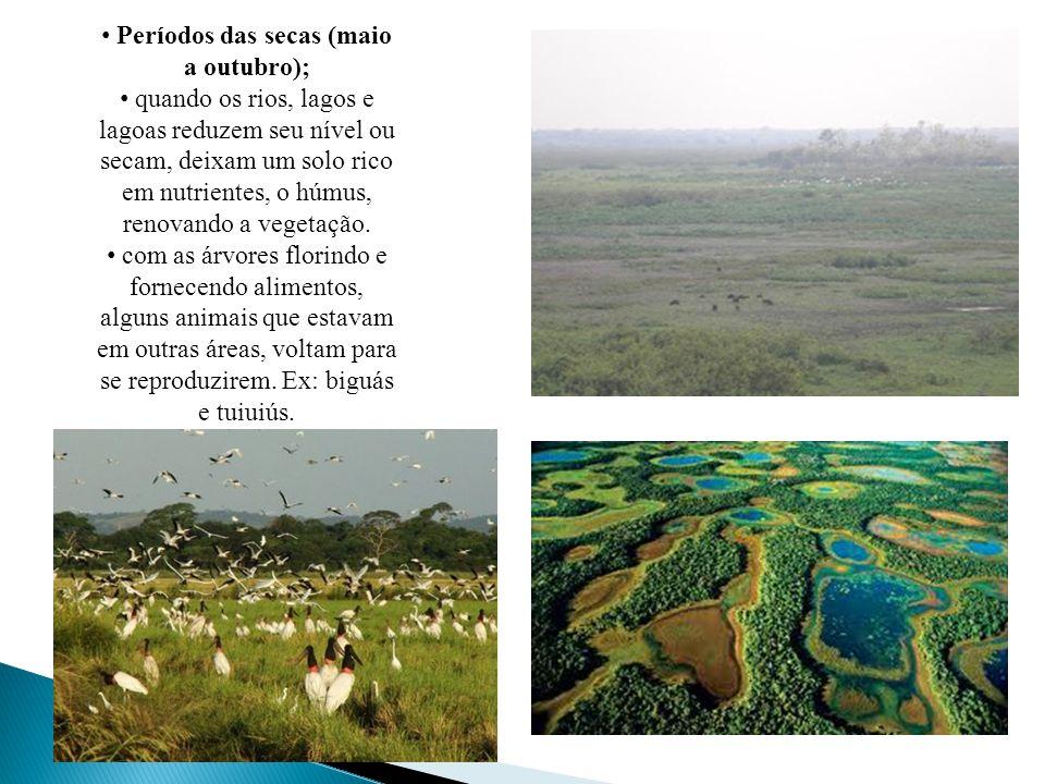Períodos das secas (maio a outubro); quando os rios, lagos e lagoas reduzem seu nível ou secam, deixam um solo rico em nutrientes, o húmus, renovando a vegetação.