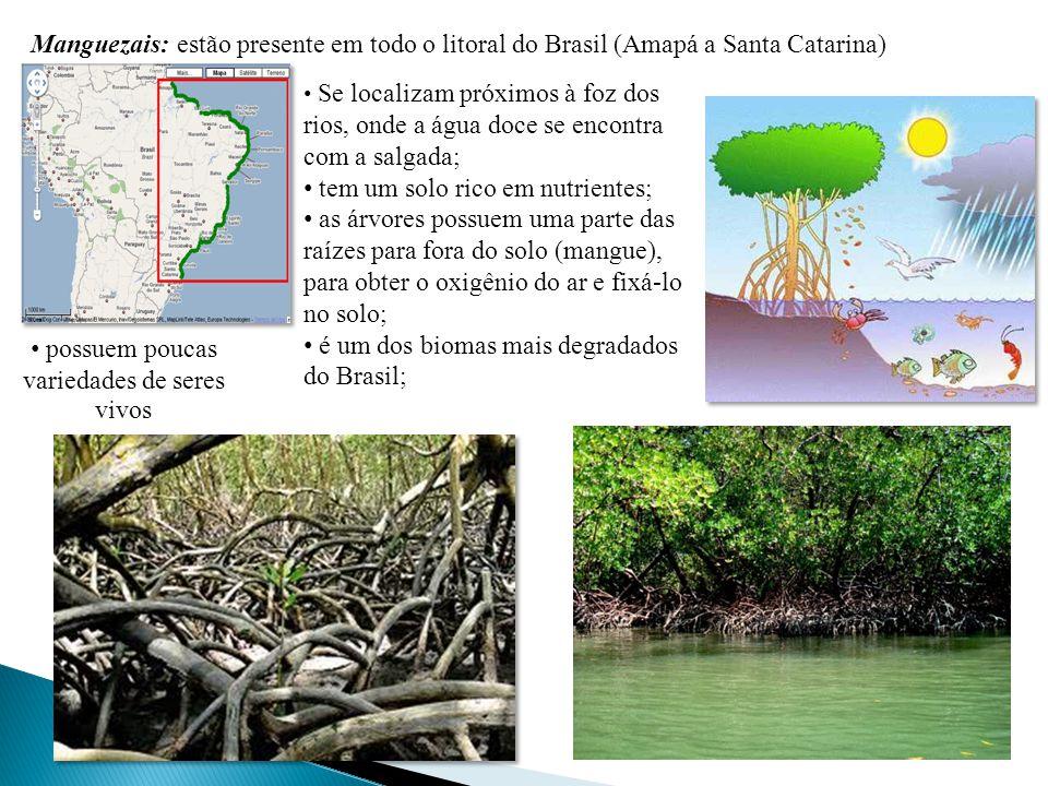 Manguezais: estão presente em todo o litoral do Brasil (Amapá a Santa Catarina) Se localizam próximos à foz dos rios, onde a água doce se encontra com a salgada; tem um solo rico em nutrientes; as árvores possuem uma parte das raízes para fora do solo (mangue), para obter o oxigênio do ar e fixá-lo no solo; é um dos biomas mais degradados do Brasil; possuem poucas variedades de seres vivos