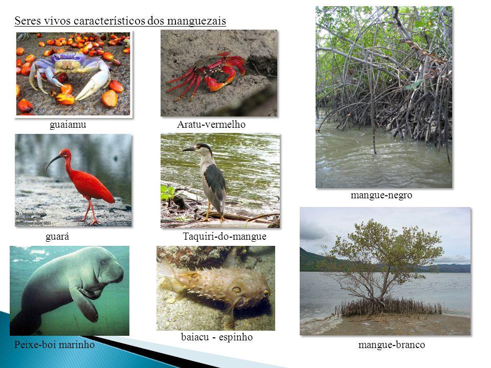 Seres vivos característicos dos manguezais guaiamuAratu-vermelho guaráTaquiri-do-mangue mangue-negro mangue-brancoPeixe-boi marinho baiacu - espinho