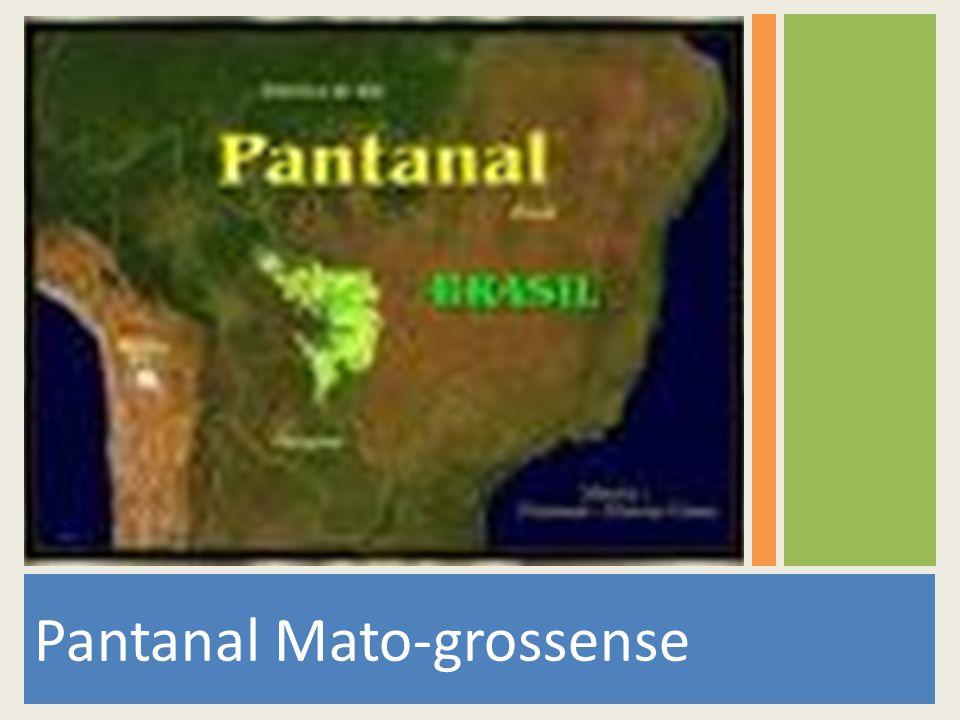 Este álbum de fotos contém maravilhas do Pantanal Matogrossense.
