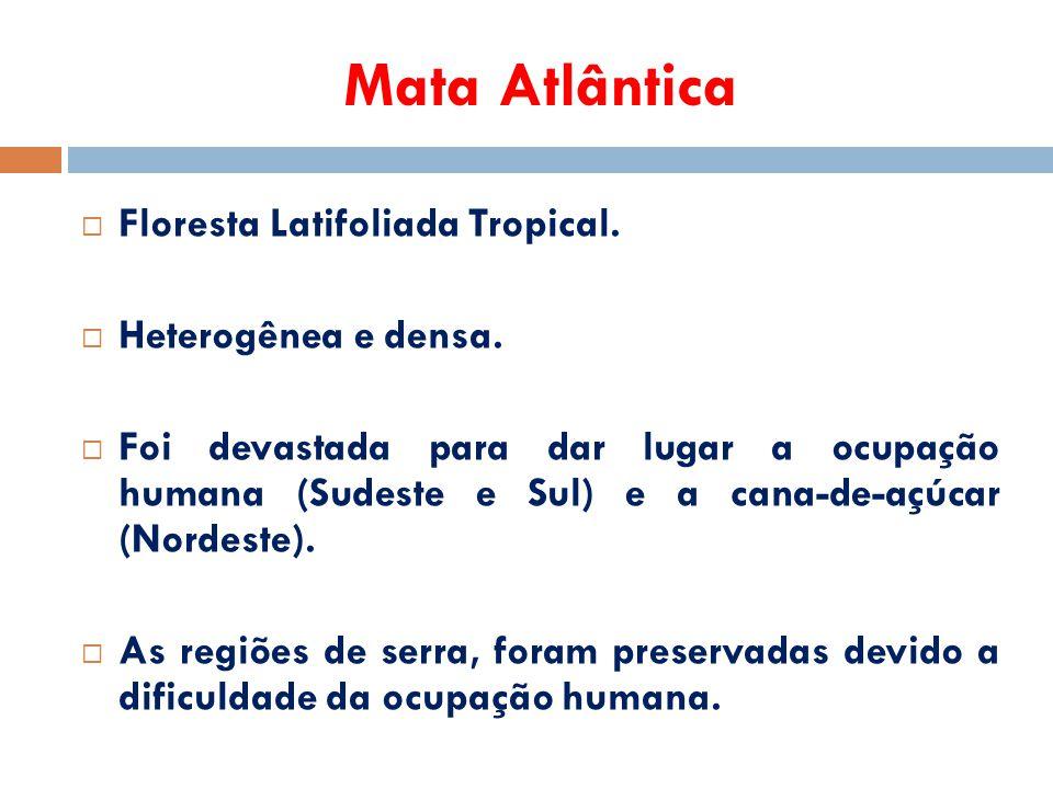 Mata Atlântica  Floresta Latifoliada Tropical.  Heterogênea e densa.  Foi devastada para dar lugar a ocupação humana (Sudeste e Sul) e a cana-de-aç
