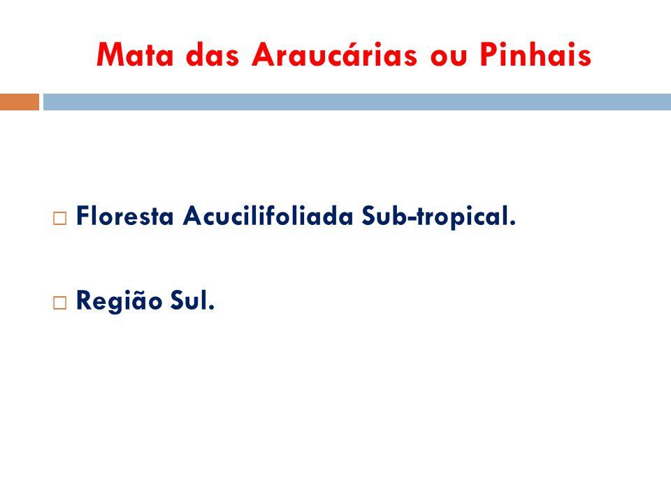 Mata das Araucárias ou Pinhais  Floresta Acucilifoliada Sub-tropical.  Região Sul.