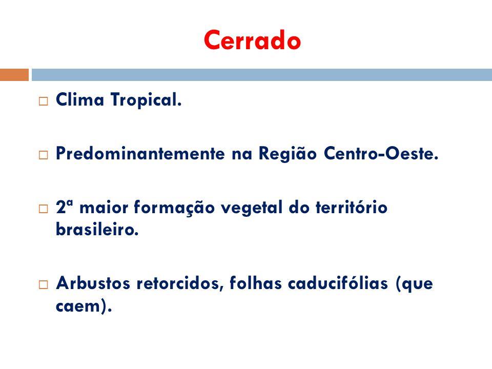 Cerrado  Clima Tropical.  Predominantemente na Região Centro-Oeste.  2ª maior formação vegetal do território brasileiro.  Arbustos retorcidos, fol